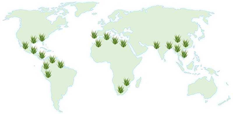 mapa mundial aloe vera