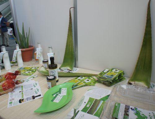 5 Tips para comprar un buen producto de Aloe vera