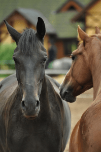 aloe vera en caballos