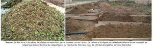 Compost de Aloe vera