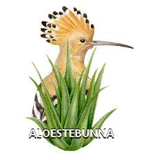 Aloestebunna